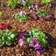 学校花壇にも春の花と…