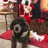 クリスマス→お正月バージョンの画像