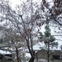 雪が積もりました!