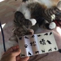 猫ちゃん付き表札(^…