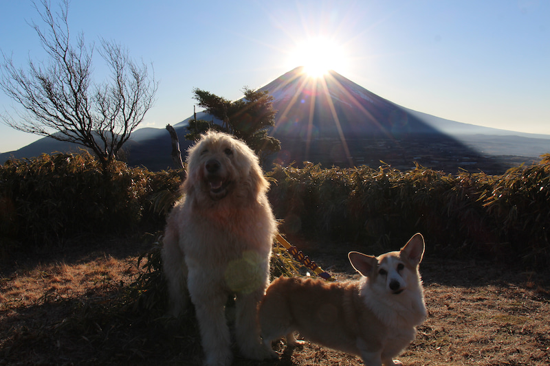 富士山麓の森にある小さなホテル...