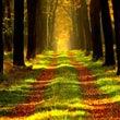 木を見る前に森を見る