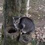 年末年始の地域猫