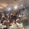 大阪自然史博物館