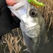 2018年 初釣り♪