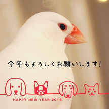 新年のご挨拶と、お正…