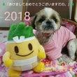 新年 ☆ どんくんク…