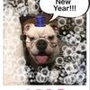 新年明けましておめでとうございます。の画像