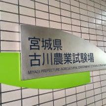 宮城県古川農業試験場…