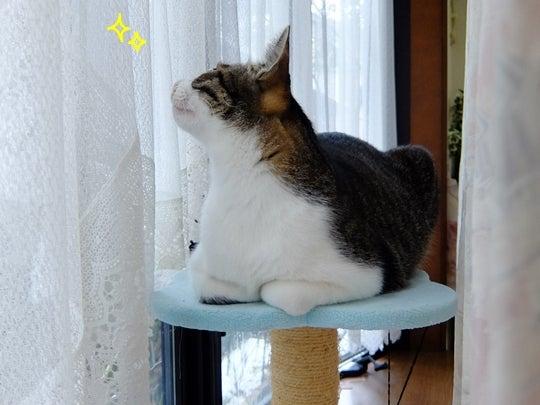 ひかいちミルキー オフィシャルブログ「柴犬ひかりといちごと猫ミルキー」Powered by Amebaいろんな眠り(動画)