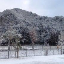 雪がちらちら☃️