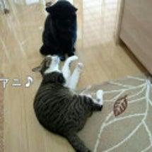 ☆猫たちの三が日☆