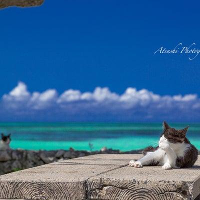冬に訪れるのにおすすめの離島は竹富島の記事に添付されている画像