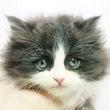 【NEW】子猫情報