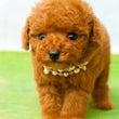 【お譲り可能な子犬】…