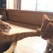 猫は飼い主のために鳴…