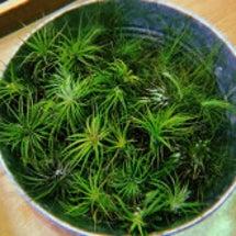 水のいらない植物