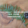 【2月】自然栽培の具体的方法論 DVD上映会の画像