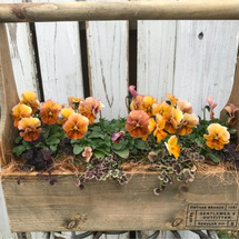 春のイベント  出展…
