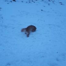 またまた雪遊び。