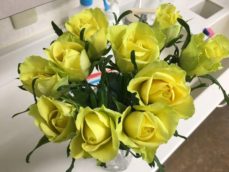 フリースタイル 診療室のバラ