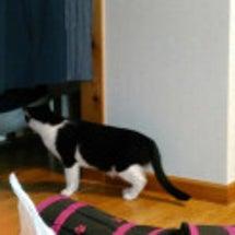 別宅の猫たち~406…