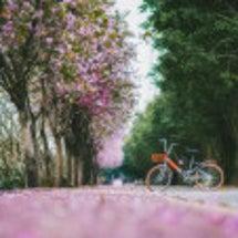 広州の冬の雨後、お花…