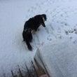 雪とミントとハッスル…