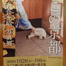 新年・岩合さんの写真…