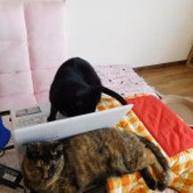 慣れない猫を抱っこす…
