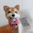 柴犬のバレンタインデ…