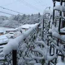 雪雪・・・招福