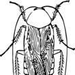 台湾のゴキブリ