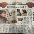 中日新聞、タウン誌、…