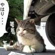 新145話 【 ねこ…