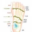 足首の可動性について…