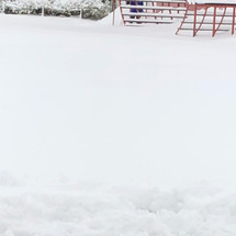 雪にノックアウトされ…