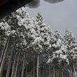 灰色の空と真っ白の雪…