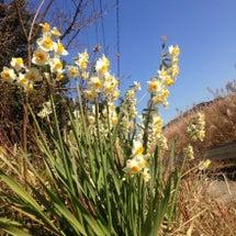 陽だまりに春。
