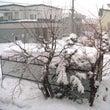 札幌も雪がいっぱい降…
