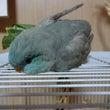 寝そべる鳥たち