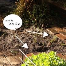 陽当たりの変化で庭の…