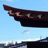 白鷺、レイキご感想の画像