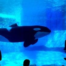 名古屋港水族館へ。