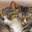 ふたりの寝顔