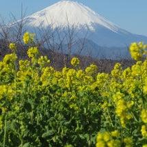 速報!本日の富士山と…