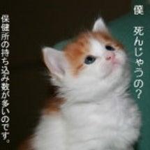 猫を殺すのは誰なのか…