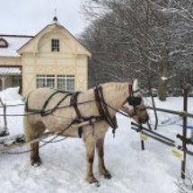 開拓の村の馬そり