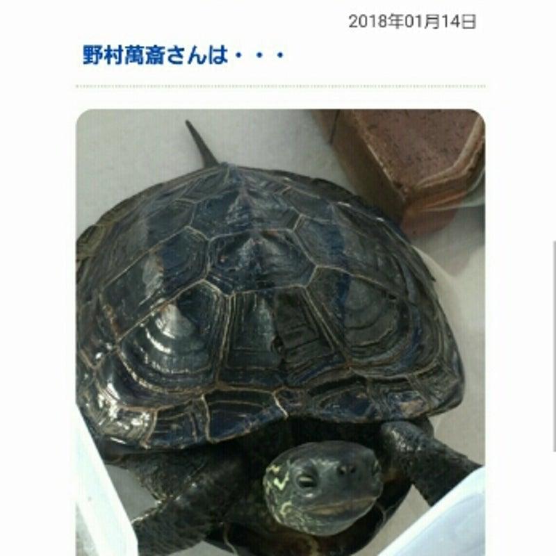 ブログ 伊藤 綾子