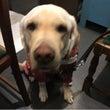 盲導犬の育成チャリテ…
